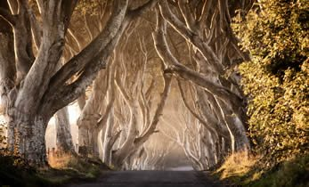 Dark Hedges - Game of Thrones Tour